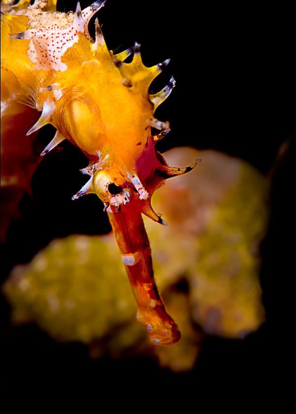 Beth_Watson_macro_ of a seahorse