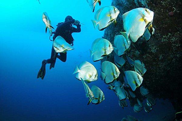 Scuba diver in Puerto Galera